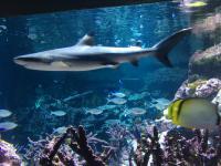 L'océan du futur a conquis ses premiers visiteurs à La Cité de la Mer